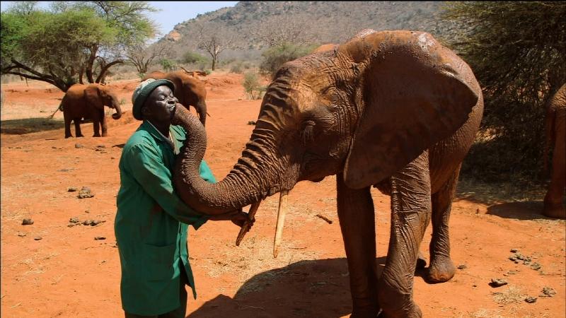 Animal Reunions on PBS