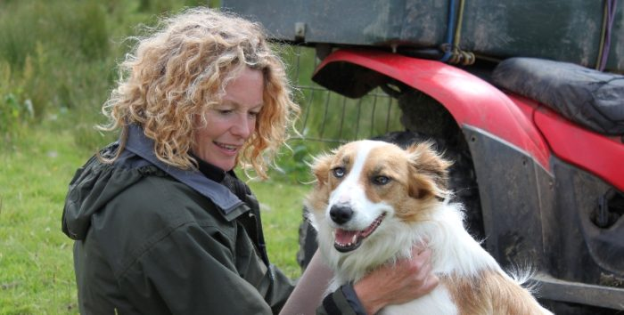 My Welsh Sheepdog Acorn TV